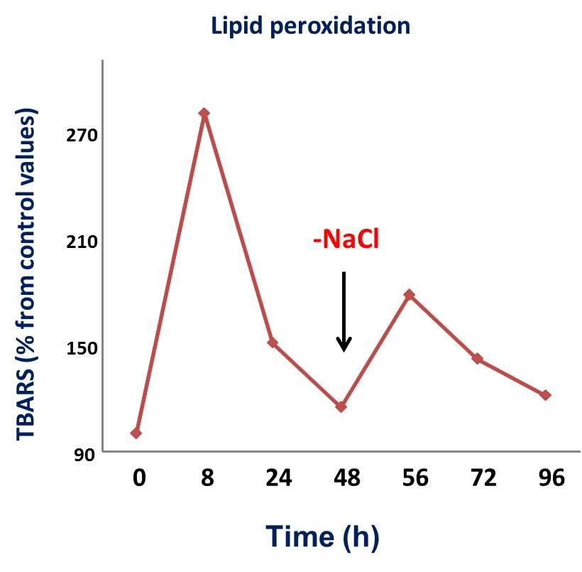 Short-term effect of salt stress (2/2)