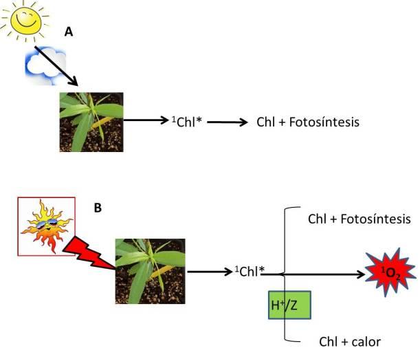 Fig 1 para ciclo X